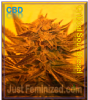 Emerald Triangle Critical Sour Diesel CBD Fem 5